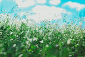 spring flowers causing allergies